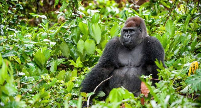 ¿A qué animal se parece más el ser humano?
