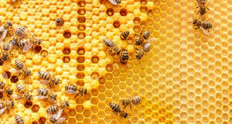¿A qué hora vuelven las abejas a su colmena?