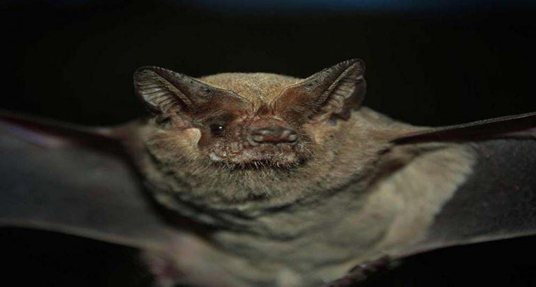 ¿Cómo ayudan los murciélagos a los humanos?