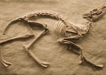 ¿Cómo distinguir entre un fósil y una piedra?