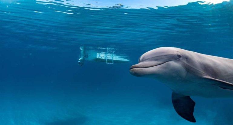 ¿Cómo duermen los delfines?