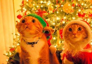 ¿Cómo proteger a tu gato y a tu árbol de Navidad?