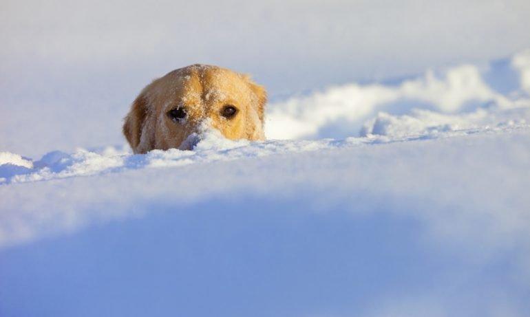 ¿Cómo se domesticaron los perros?