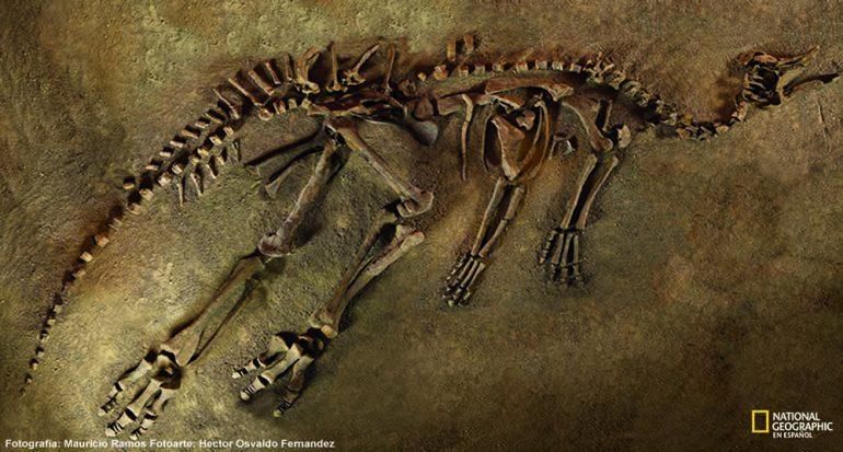 ¿Cómo se fosiliza un hueso?