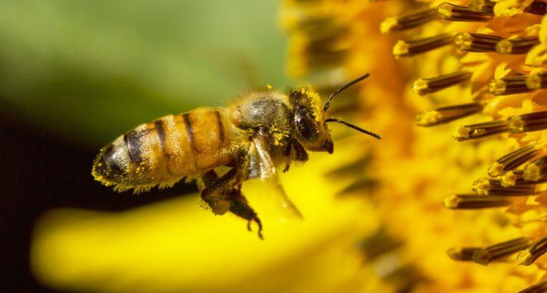 ¿Cómo ven las abejas?