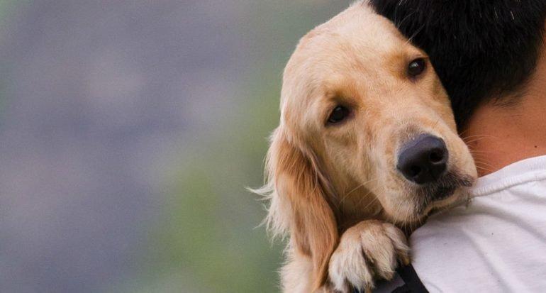 ¿Crees que tu perro te entiende?