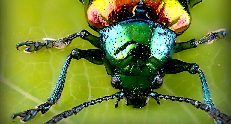 ¿Cuál es el insecto más abundante del planeta?