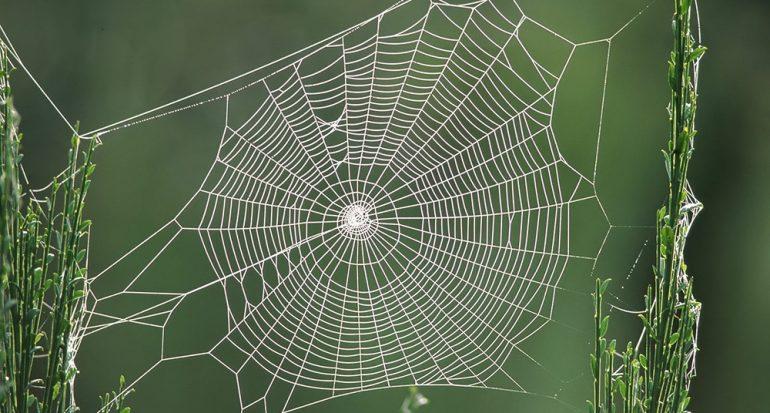 ¿Cuál es el material más resistente creado por la naturaleza?