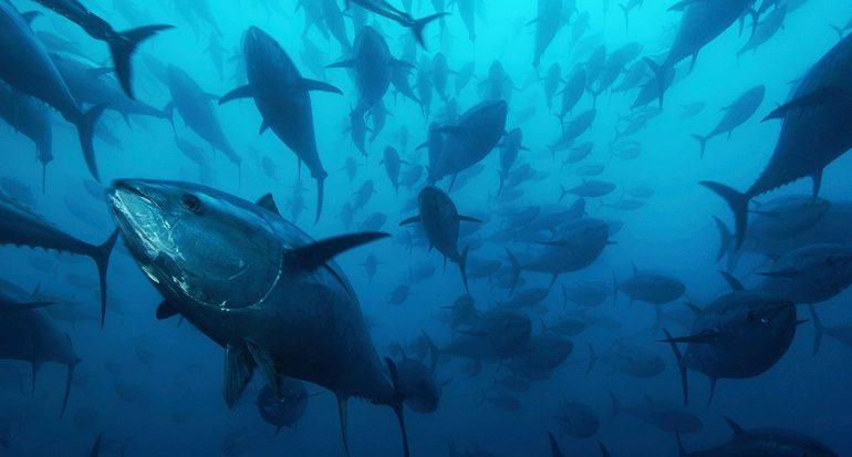 ¿Cuál país del mundo es el mayor productor de atún?