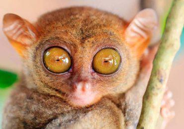 ¿Cuáles animales tienen los ojos más grandes?