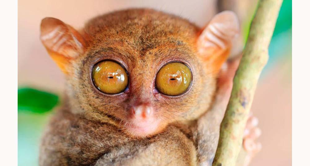 Cuáles Animales Tienen Los Ojos Más Grandes National Geographic