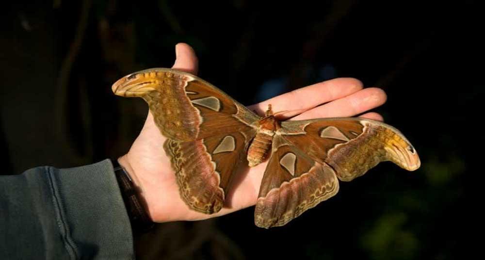 Cuáles son los insectos más grandes del mundo? - National Geographic ...