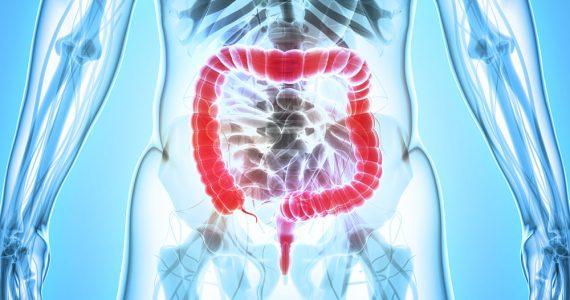 ¿Cuántas bacterias hay en el intestino grueso?