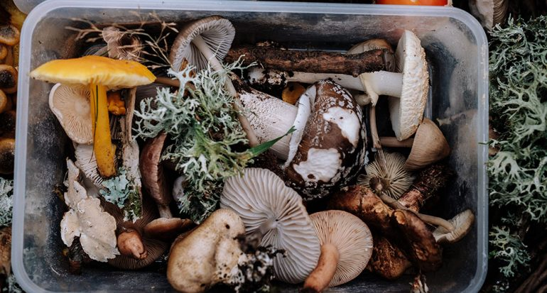 ¿Cuántas especies de hongos comestibles existen en México?