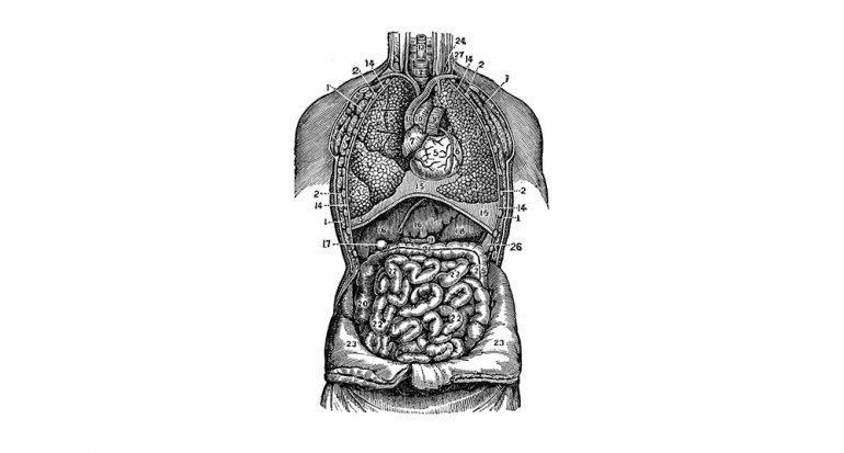 ¿Cuánto mide el intestino delgado?