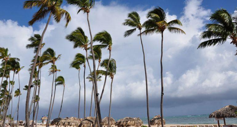 ¿Cuántos cocos da una palmera?