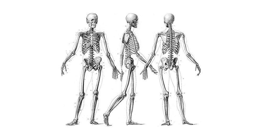 Cuántos huesos tiene el cuerpo humano? - National Geographic en Español
