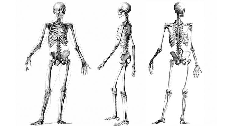 ¿Cuántos huesos tiene un ser humano adulto?