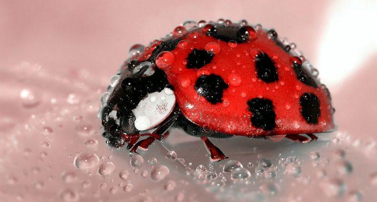 ¿Cuántos insectos pueden vivir en el agua?