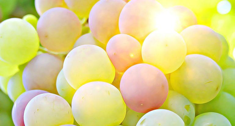¿Cuántos tipos de uvas hay?