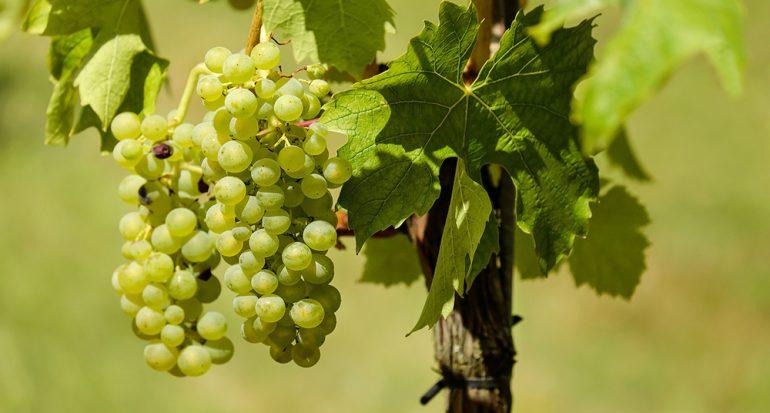 ¿En qué región de Estados Unidos se produce más del 80% del vino de todo el país?