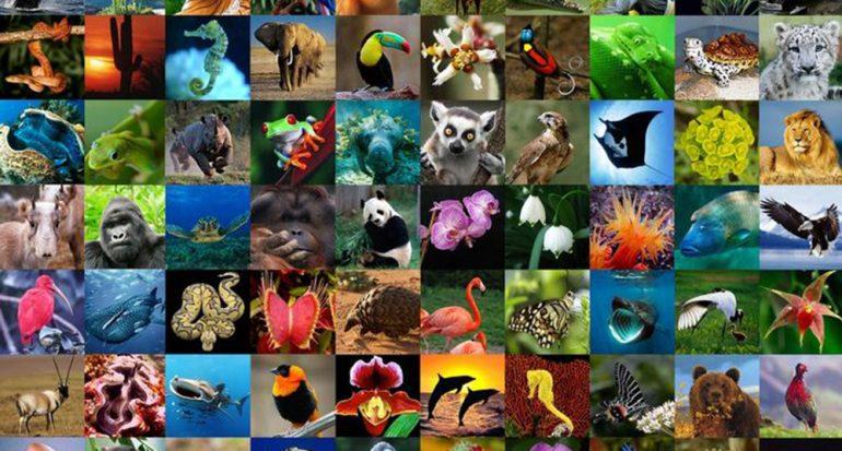 ¿En qué región del mundo habita la mayor parte de la diversidad biológica?