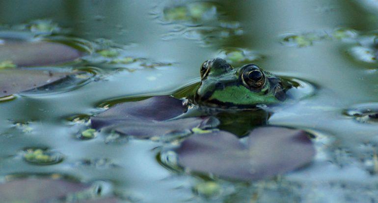 ¿Es posible una lluvia de ranas?