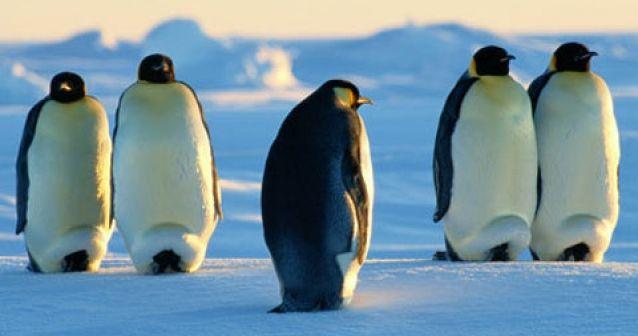 ¿Golf en la Antártida?