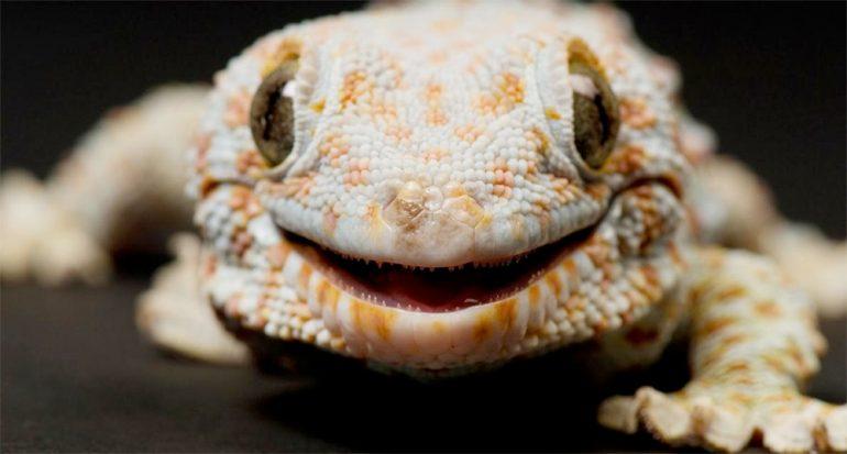 ¿Las lagartijas son tan silenciosas como parecen?