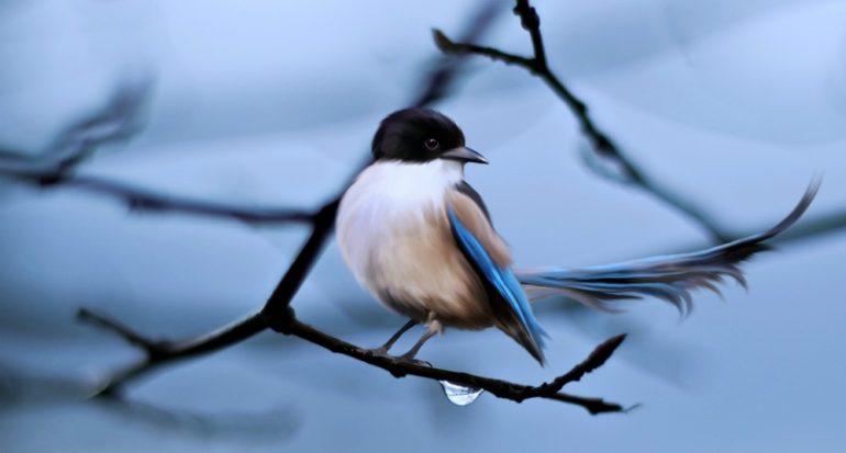 ¿Las plumas son un problema para las aves ante los depredarores?