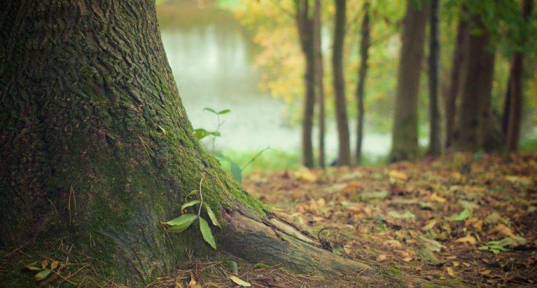 ¿Los árboles padecen cáncer?