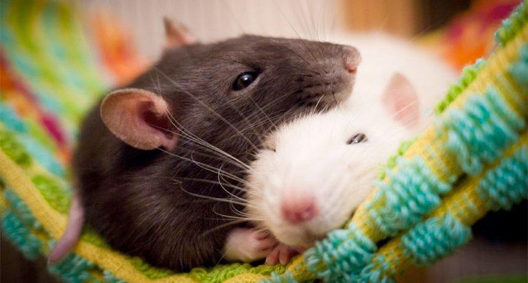 ¿Los animales sueñan?
