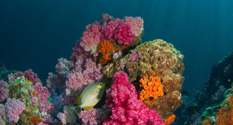 ¿Los corales son plantas o animales?