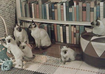 ¿Los gatos pueden reconocer a sus abuelos?
