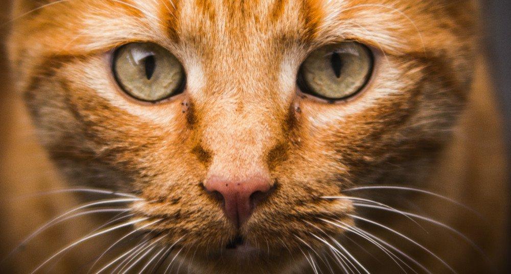 ¿Los gatos siempre caen de pie?