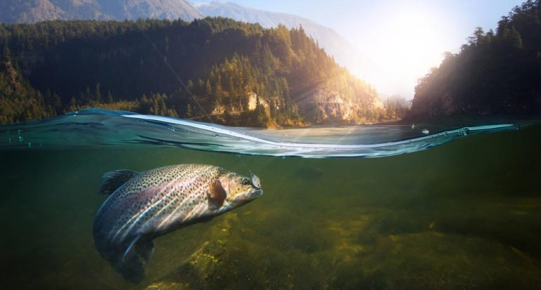 ¿Los peces dejan de crecer?