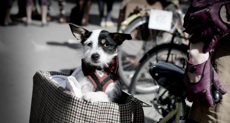 ¿Los perros sienten celos?