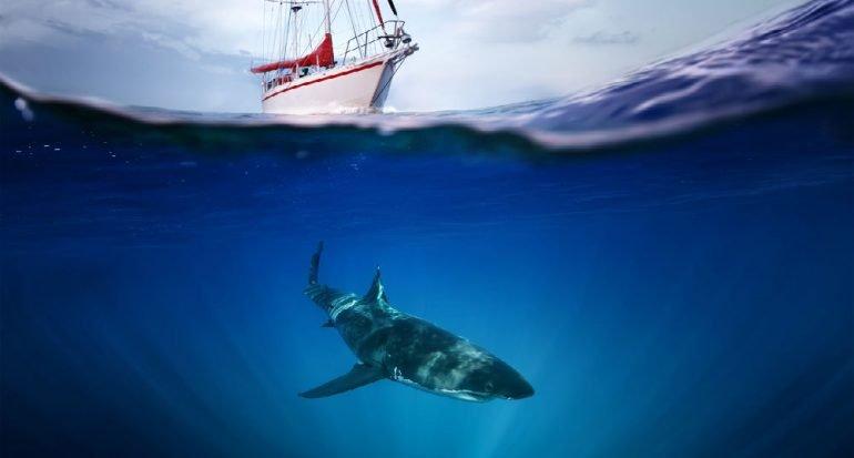 ¿Los tiburones huelen la sangre?