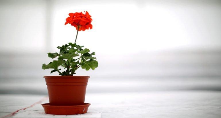 ¿Olvidas regar las plantas?
