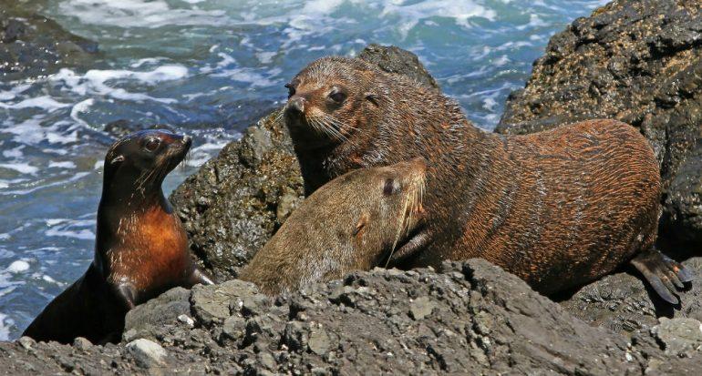 ¿Para qué sirven los bigotes de las focas?