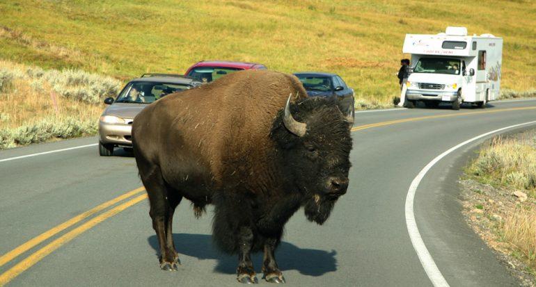 ¿Planeas visitar los parques nacionales estadounidenses?