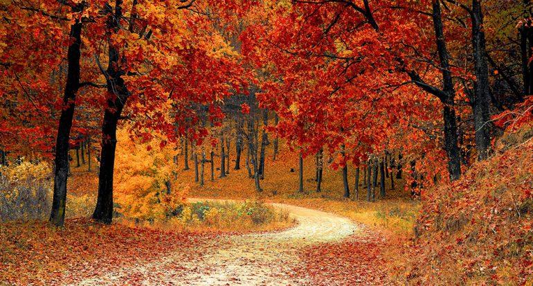 ¿Por qué en otoño las hojas se tornan color rojizo y se caen?