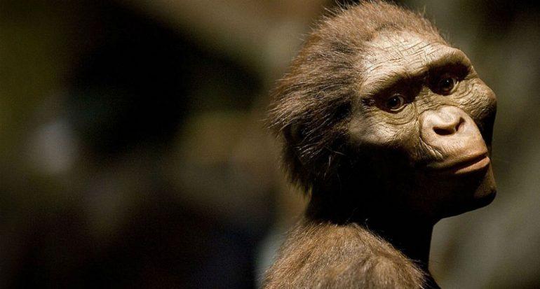 ¿Por qué la Australopithecus Lucy se llama así?