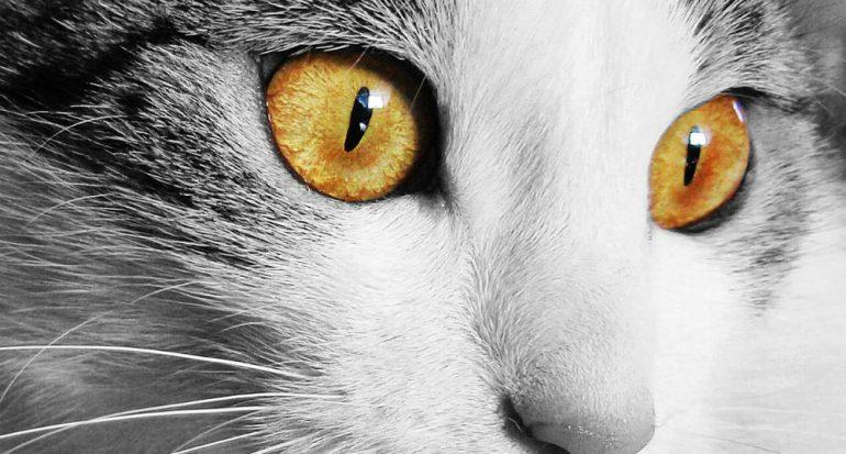 ¿Por qué los gatos tienen las pupilas alargadas?
