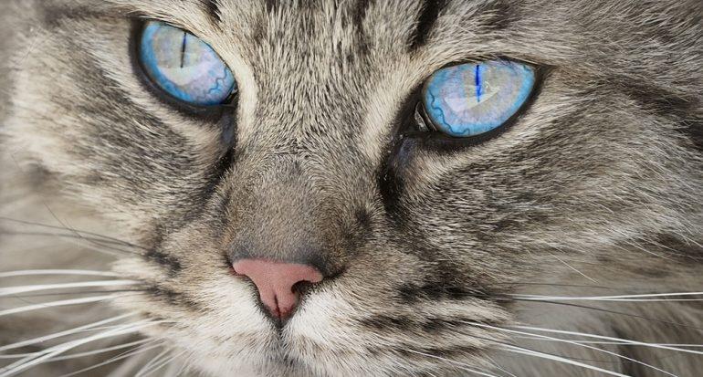 ¿Por qué los gatos tienen las pupilas diferentes?