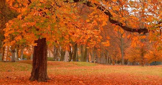 ¿Por qué otoño es rojo en América y amarillo en Europa?