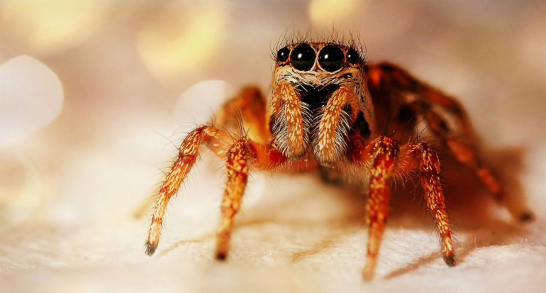 ¿Por qué tememos a las arañas?