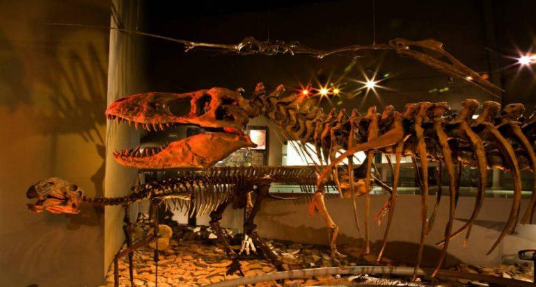 ¿Qué hacer si se encuentra un fósil?