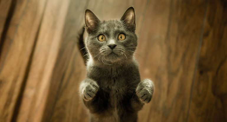 ¿Qué tipo de música le gusta a los gatos?