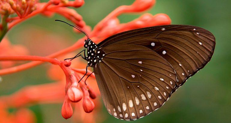 ¿Sabes en dónde tienen el sentido del gusto las mariposas?